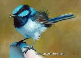 Superb Fairywren by KathrynWhiteford