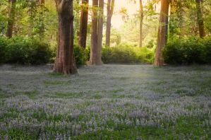 Premade Forest Meadow by Jeni-Sue