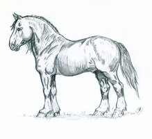 Shire Horse Stallion Sketch by Bonesy