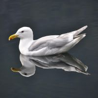 seagull_0810 by sjfbetty