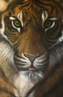 Sumatran Tiger by meeshel99