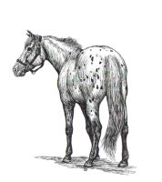 Spotted Horse by WoodstockLover8