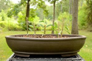 Bonsai Forest Day One by lamorth-the-seeker