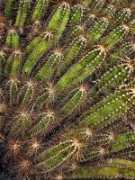 Cactus by LightShooter