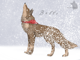 Balto by Bloodjer
