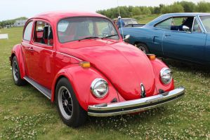 Superb Beetle by KyleAndTheClassics