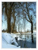 winter in poland by barbaracieszynska