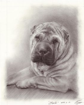 SharPei by Tarsanjp