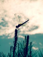 Dragonfly. by MireiaSalvado