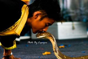 King Cobra Kiss by lopaque