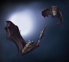 How to draw bats by LadyAway