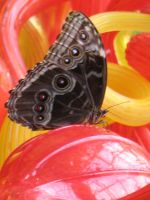 Butterfly on Chihuly by Jyl22075