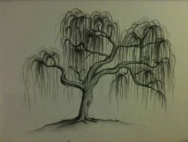 Willow Tree by csoucie