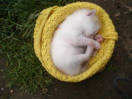 Kitten_Sleeping_stock by drowned-in-air-stock