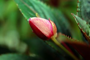 Budding by Dominick-AR