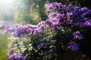 Flowers In The Sunlight by MHalling
