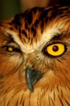 Wink of An Owl by esee