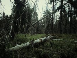 Dead Forest by Topielica666