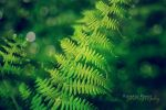 green passion by mydecember90 - Ye�il [Avatarlar]