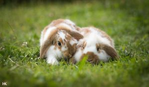 Two Bunnies by Pfoten-Fotografie