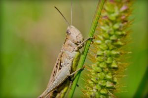 Little grasshopper by MattHalic