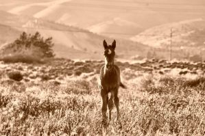 Old West, New Horse by Caitiekabob