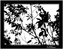 leafs 3 by raven30hell