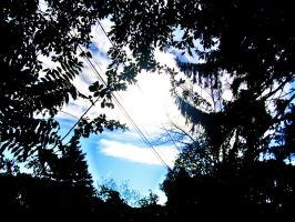 Sky through the trees by jutto