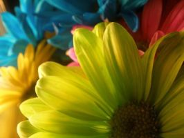 Flores Fluorescentes by backtothebeginning