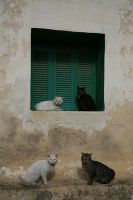 cats by SylvieRider