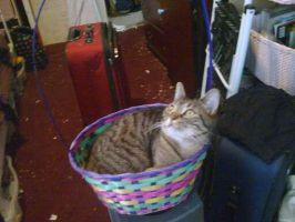 Kairi the cat chillin in a basket by forever-at-peace