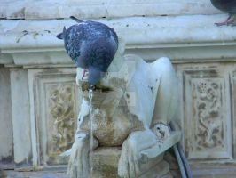 Pigeons of Sienna No. 3 by Dragonmum