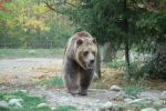 grizzly bear 0275 by stocklove