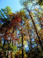 some fall pics III by Heidipickels