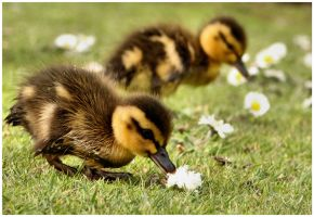 brothers by VastandInfinite