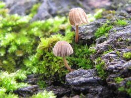 Natures Mini Umbrellas by SnakeMouth