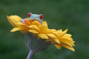 frog in the garden by AngiWallace