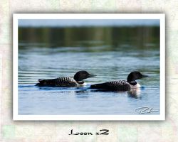 Loon x2 by Merlinstouch
