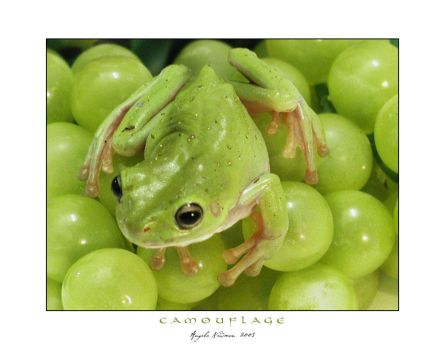 Camouflage Frog by lilnymph