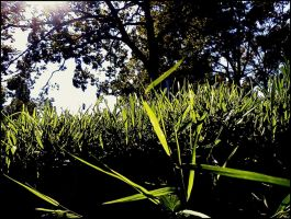 Leaves of Grass ~ by BobCatD