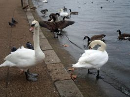 Hyde Park 9 by MASYON