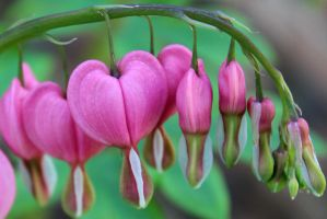 Pink Hearts by Treekami