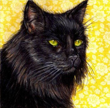 Black Cat by Lionsong