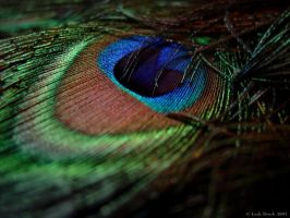 Peacock Eye I by zieora