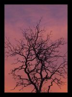 silhouette on pinks by iDOtheDEW