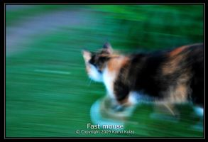Fast mouse by qlas