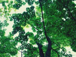 trees and filter by ferkie17