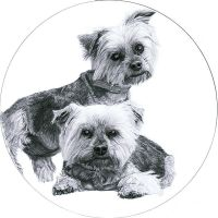 Yorkshire Terriers by PunkyMeadows