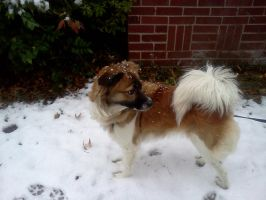 My Doggy playing in the snow by Kyuubichowderfan