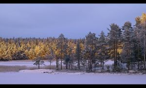 A golden winter evening by eswendel